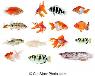 Fish collection with many different tropical fish