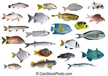 fish, collezione, tropicale