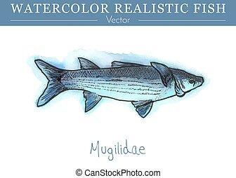 fish., comestible, peint, main, aquarelle, vecteur, conception