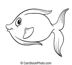 fish, contour