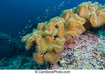Fish Coral in Coral reef