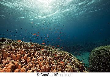 fish., coral, ocean.