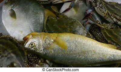 fish, croaker, délicieux, pomfret
