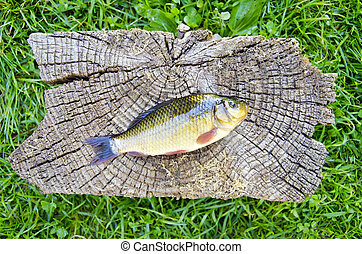 crucian carp (Carassius carassius) on old wooden background...