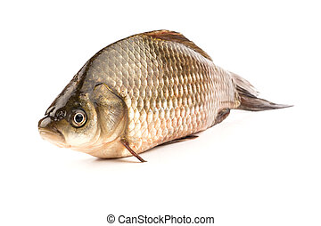 Fish crucian stands on his stomach on a white background