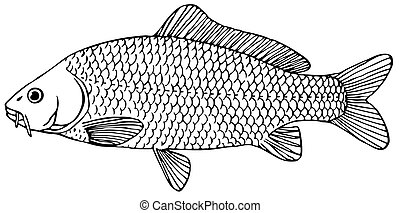 Fish Cyprinus carpio