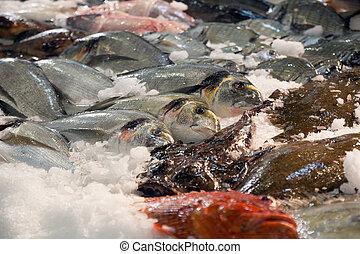 fish, dále, španělský, obchod, čelit