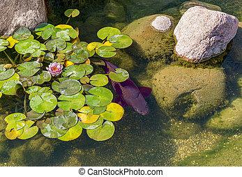 fish, décoratif, étang