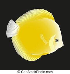 fish., dysk, żółty
