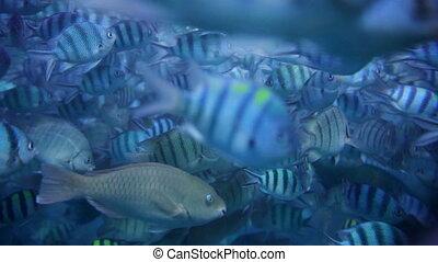fish, eau, clair, petit, bleu, natation