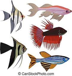 fish, ensemble, dessin animé, aquarium