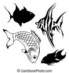 fish, ensemble, fond blanc