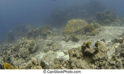 Fish eye effect underwater