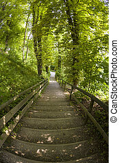 Fish-eye View of Stairs in a Forest in Summer