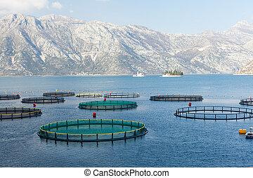 Fish farm in the Bay of Kotor.