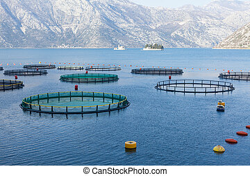 Fish farm in the Bay of Kotor. Montenegro