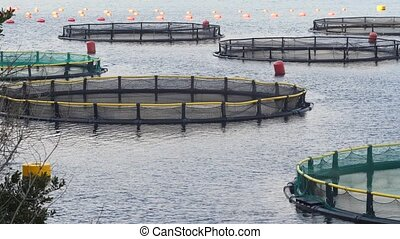 Fish farm in the Bay of Kotor. Montenegro
