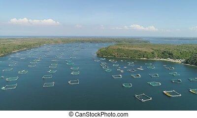 Fish farm with cages for fish and shrimp in Philippines, Luzon. Aerial view fish ponds for bangus, milkfish. Fish cage for tilapia, milkfish farming aquaculture or pisciculture practices.