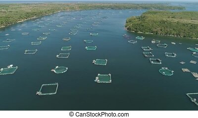 Fish farm with cages for fish and shrimp in the Philippines, Luzon. Aerial view of fish ponds for bangus, milkfish. Fish cage for tilapia, milkfish farming aquaculture or pisciculture practices.