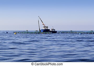 fish farm on blue ocean sea horizon