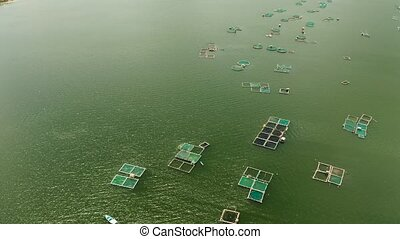 Fish farm with cages for fish and shrimp on the lake Taal, top view. Fish cage for tilapia, milkfish farming aquaculture or pisciculture practices. Philippines, Luzon.