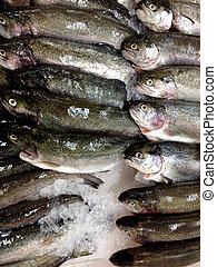 fish, fishmarket, świeży, trout.