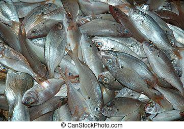 fish, fishmarket, k