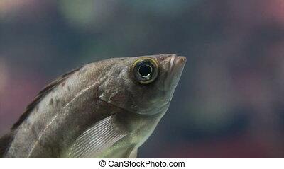 fish floating in a glass aquarium