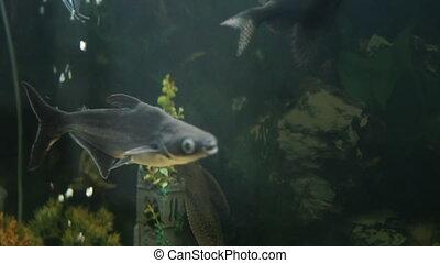 fish floats in an aquarium