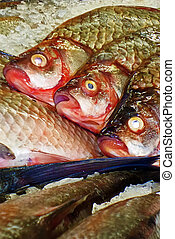 Fish for sale 2