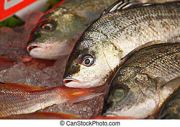 fish for sale