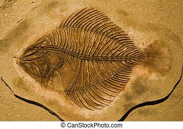 fish, fossiles