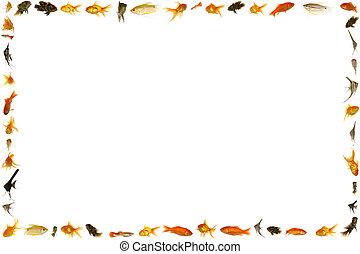 Fish frame isolated on white background 5333 x 8000 pixels.