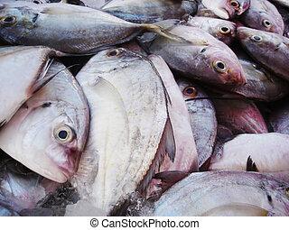 Freshly caught fish at a market