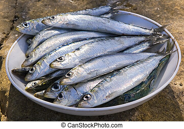 fish - full plate of fresh sardines outside close up