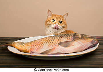 fish, grand chat, rouges