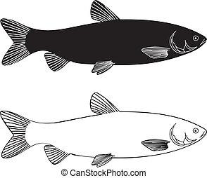 Fish - Grass Carp - vector illustration black and white...