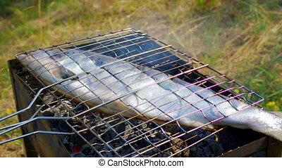 fish, grill., truite