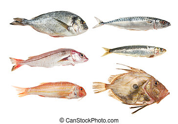 Selection of fresh raw fish, bream, haddock, red mullet, mackerel, sardine and john dory isolated against white
