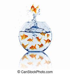 fish, guld, tillsammans