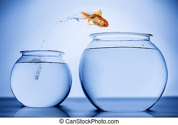 Fish happily jumping from small bowl to a bigger bowl