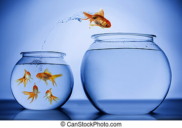 Fish happily jumping from small bowl with a school of fish to a bigger bowl with no fish
