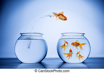 Fish happily jumping to a school of fish
