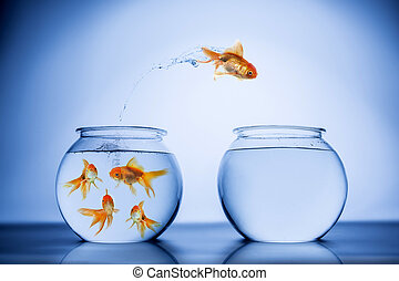 Fish happily jumping from the crowd