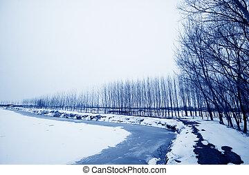 fish, hiver, étang, neige