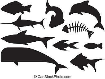 fish icons set (dolphin, fish bone, carp fish, shark, whale,...