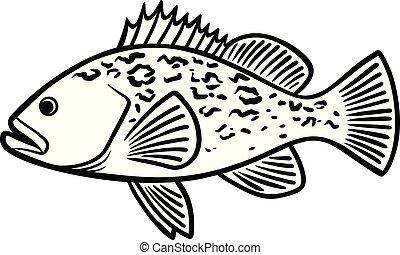 fish, illustration, mérou