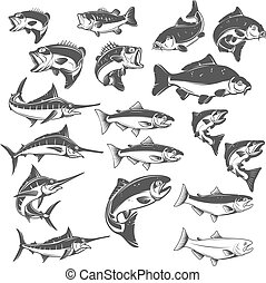 Fish illustrations on white background. Carp, bass fish, trout,
