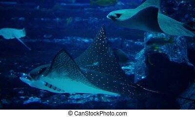Fish in a big aquarium and oceanarium. Fish Tank. - Fish in...