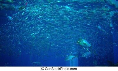 Fish in a big aquarium and oceanarium. Fish Tank.